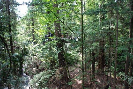 Vancouver Utara, Kanada: Out among the trees