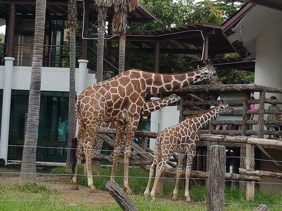 Chiangmai Night Safari