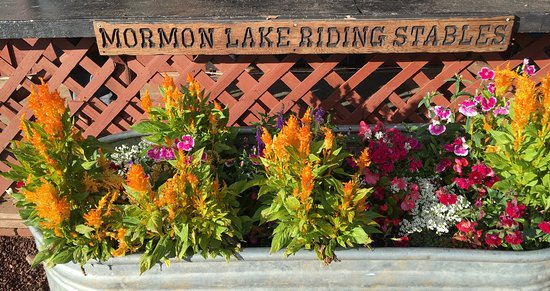 Mormon Lake Lodge and Campground: photo1.jpg