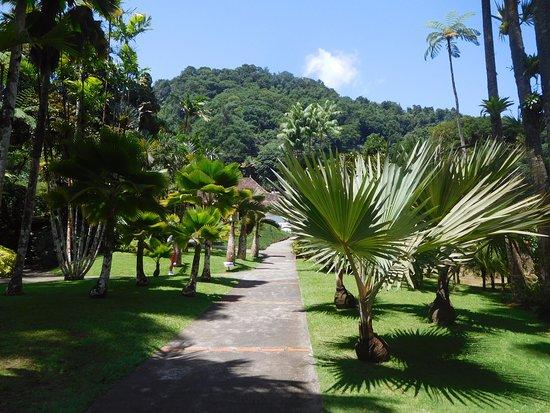 une all e de palmiers du jardin avec la case en fond photo de jardin de balata fort de france. Black Bedroom Furniture Sets. Home Design Ideas