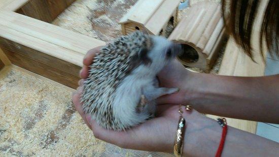 Touching Zoo V Gostyakh u Yenota