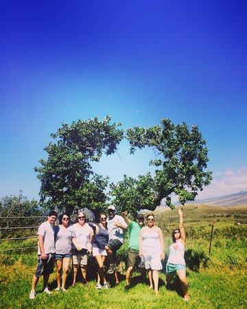 Paia, HI: Maui Easy Riders