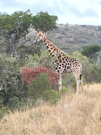 Sidbury, Sør-Afrika: photo6.jpg