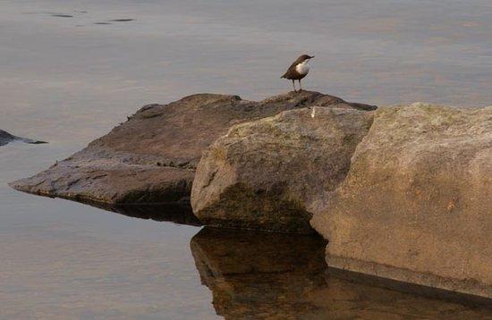Rock House : Dipper Bird taken from Deck