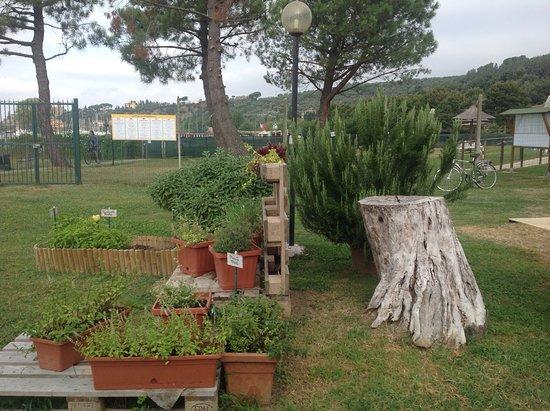Camping La Spiaggia ***: The herb garden