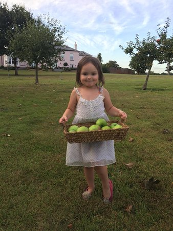Syon House Hotel: Picking apples in the orchard