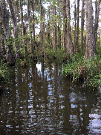 Dr. Wagner's Honey Island Swamp Tours: photo7.jpg