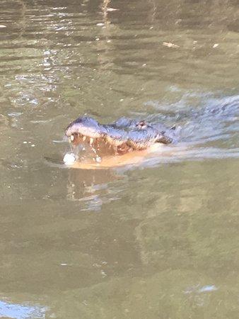 Dr. Wagner's Honey Island Swamp Tours: photo9.jpg