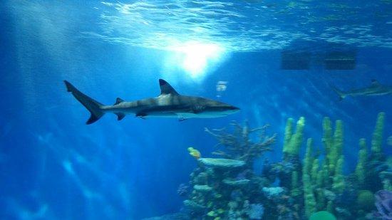 Aquarium of Niagara: 20160901_101738_large.jpg