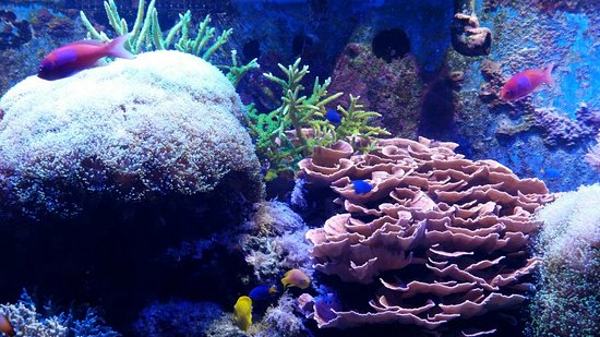 Aquarium of Niagara: 20160901_101545_large.jpg