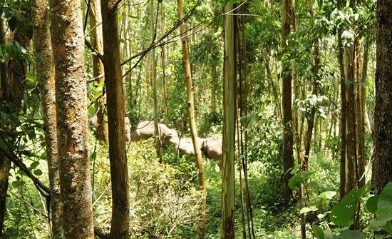 Kanthalloor, India: قطيع الفيلة من بعيد
