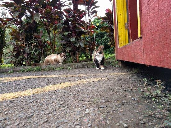 Kaneohe, HI: Cats