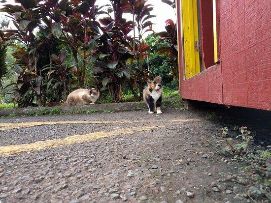 Kaneohe, Hawái: Cats