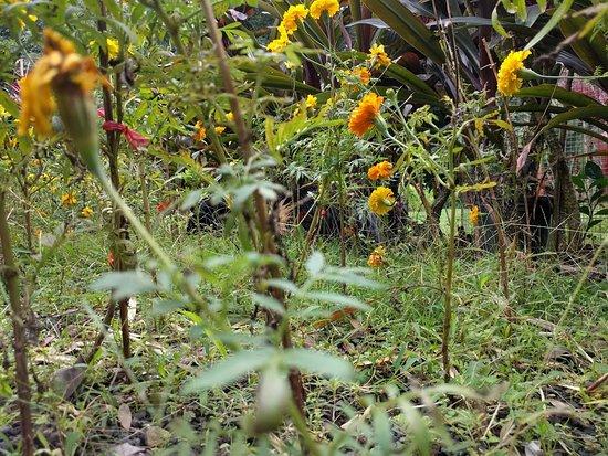 Kaneohe, Hawái: Flowers