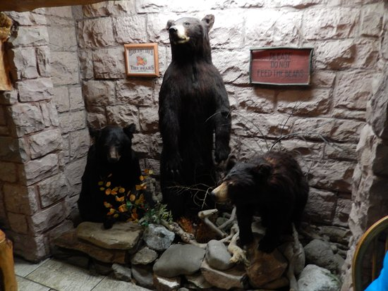 Three Bear Lodge: Les ours