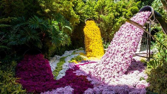 Jardin Botanico de Medellin: Orquídeas, Pájaros y Flores en el Jardín Botánico de Medellín