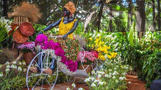 Orqu deas p jaros y flores en el jard n bot nico de for Bodas en el jardin botanico de medellin