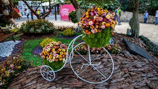 Feria de las flores - Bild von Medellin, Bezirk Antioquia ...