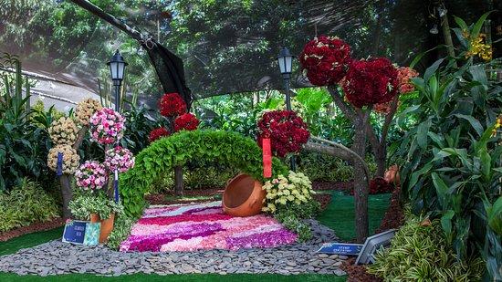Orqu deas p jaros y flores en el jard n bot nico de for Bodas en el jardin botanico medellin