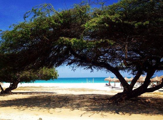 MVC Eagle Beach: photo8.jpg