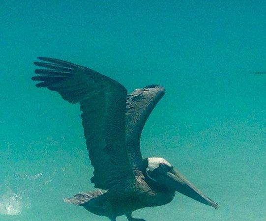 MVC Eagle Beach: photo9.jpg