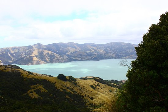 Pohatu Penguin Habitat: Exploring the area around Akaroa