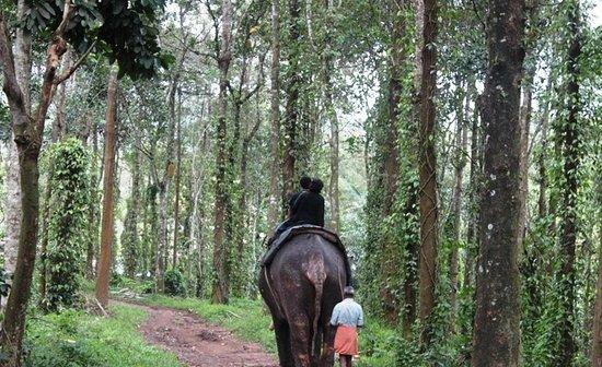 Elephant Junction - Day Tours: بداية الانطلاقة الى الداخل
