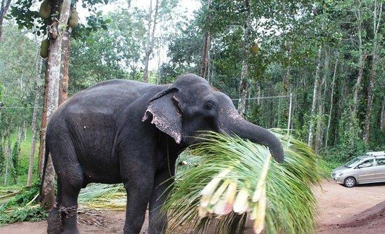 Elephant Junction - Day Tours: فيل اخر يعمل