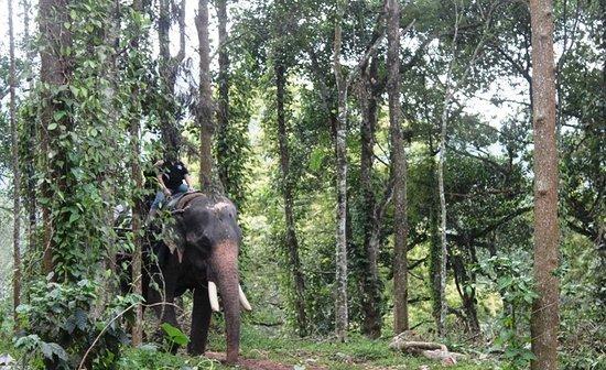 Elephant Junction - Day Tours: الرحلة ممتعة وتستغرق نصف ساعة