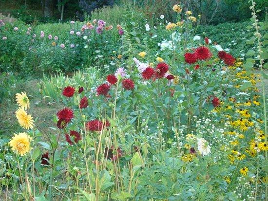 Auberge de Layotte: fleuri