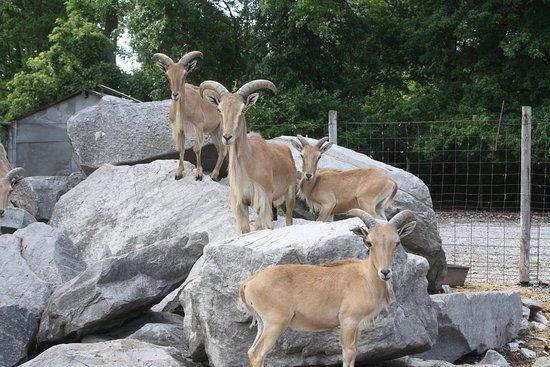 Lagoon Deer Park: Variety of animals