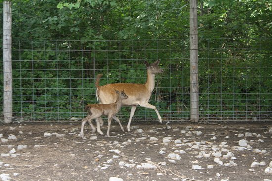 Lagoon Deer Park: Brand new baby and this mama was NOT happy with people being near it