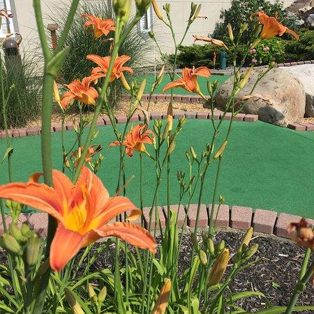 Castle Cove Mini Golf: Scenery