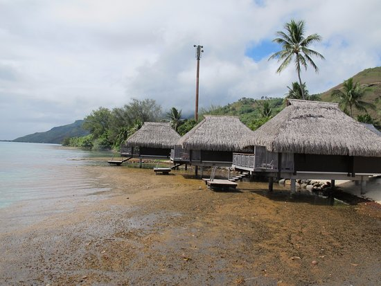 Lagoon Bungalows Plant Debris Detracts From The Water