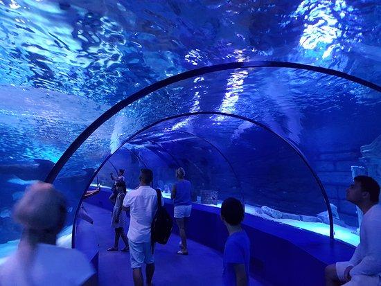 tunnel sous l 39 eau photo de antalya aquarium antalya tripadvisor. Black Bedroom Furniture Sets. Home Design Ideas