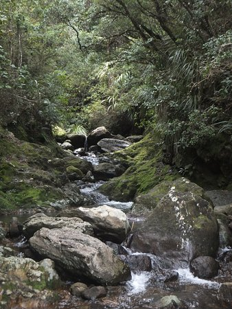 Whangamata, Νέα Ζηλανδία: The Wentworth stream above the Falls
