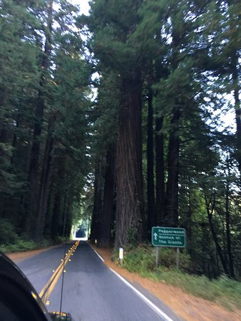 Sequoia Park Eureka 2020 All You Need To Know Before