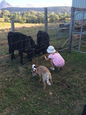 Blackwattle Farm Bed And Breakfast: photo5.jpg