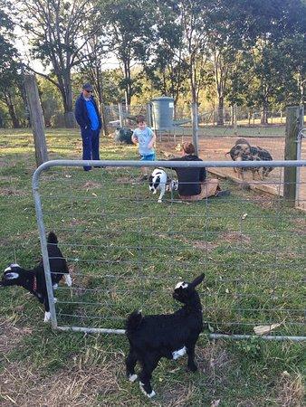 Blackwattle Farm Bed And Breakfast: photo7.jpg