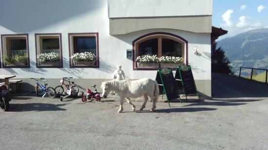 Stummerberg, Austria: das Pony ist echt................