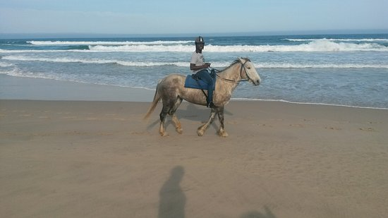 Featherfoot Beach Horse Trails & Riding School