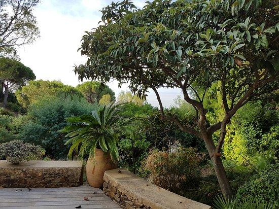 Villa du Plageron: Vue du petit déjeuner devant la chambre négliger