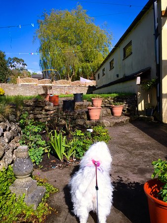 Croscombe, UK: George Inn - Pub garden