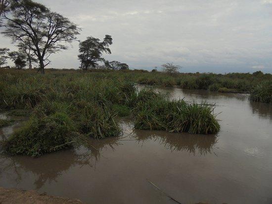 Foto Voyager Ziwani, Tsavo West