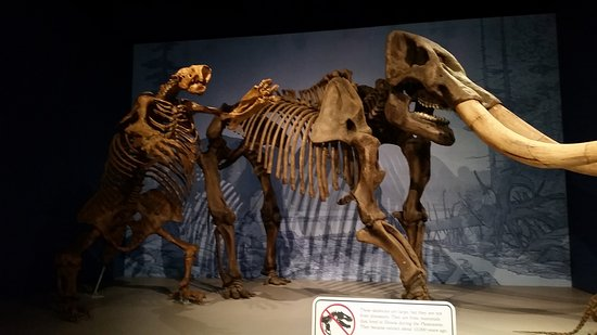 Illinois State Museum: sloth and a wooly