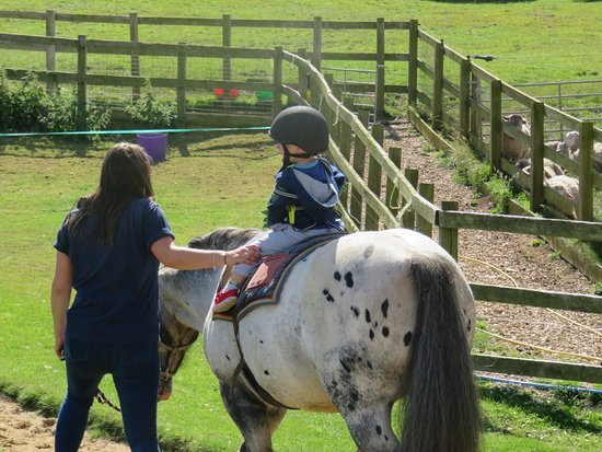 Abbotsbury Childrens Farm: Pony rides for all ages