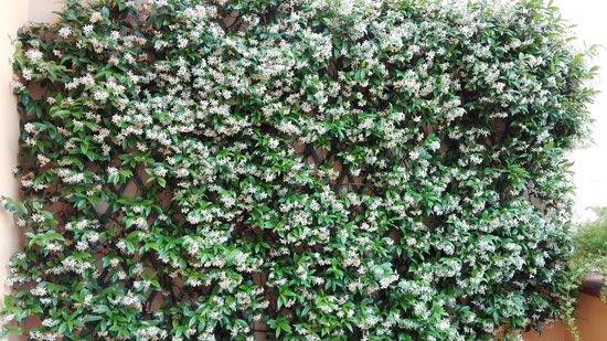 Hotel Rivoli: gelsomino fiorito sulla parete del terrazzino della camera