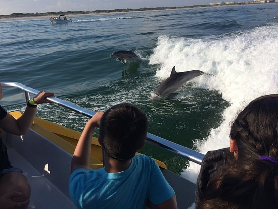 Thundercat Dolphin Watch: Dolphins jumping through the boat wake. Kids sit in back row.
