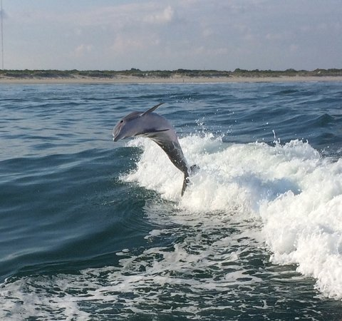 Thundercat Dolphin Watch: Great leap!