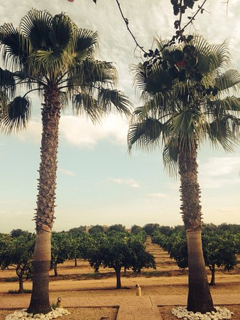 Agroturismo Ibiza Can Jaume: photo1.jpg